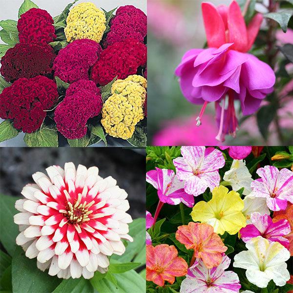 Красивоцветущие